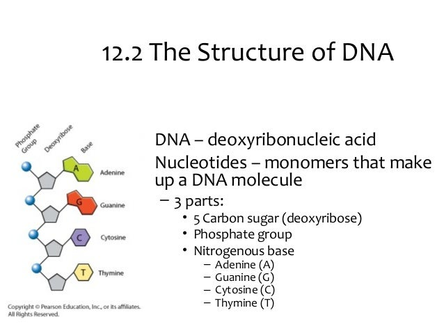 Notes ch12 DNA