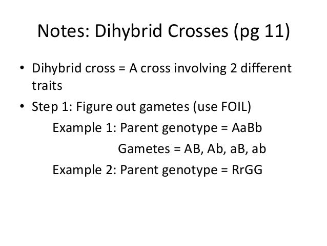 Notes dihybrid crosses