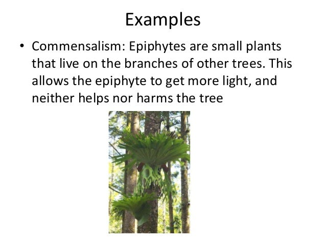 tree and epiphytes symbiotic relationship