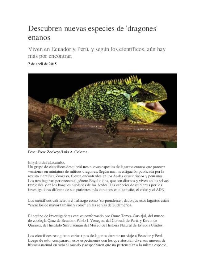 Descubren nuevas especies de 'dragones' enanos Viven en Ecuador y Perú, y según los científicos, aún hay más por encontrar...