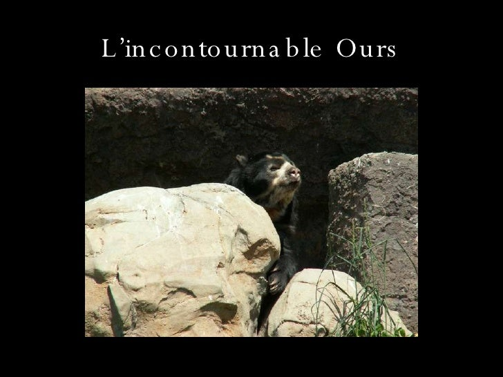L'incontournable Ours