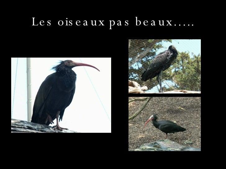 Les oiseaux pas beaux…..