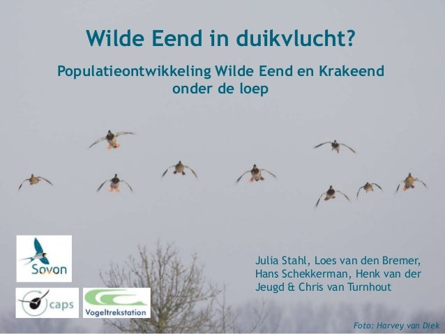 Julia Stahl, Loes van den Bremer, Hans Schekkerman, Henk van der Jeugd & Chris van Turnhout Wilde Eend in duikvlucht? Popu...