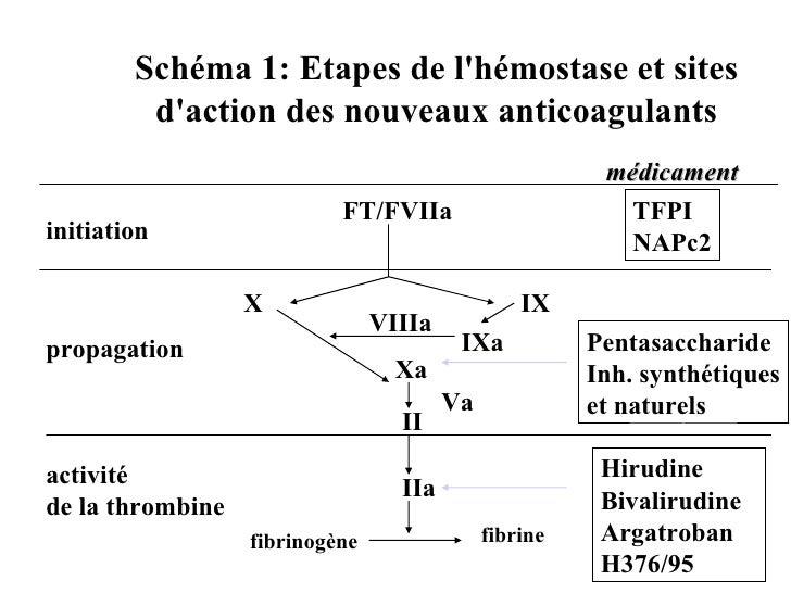 Schéma 1: Etapes de l'hémostase et sites          d'action des nouveaux anticoagulants                                    ...