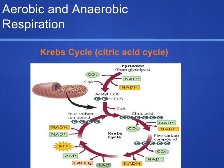 aerobic anaerobic biodegradation Discovering anaerobic biodegradation conditions research & explore the publications, figures, data, questions & answers from a vast knowledge base of researchers.