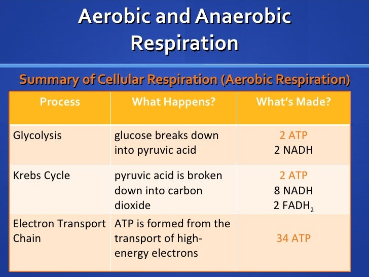 nov  2  aerobic vs  anaerobic