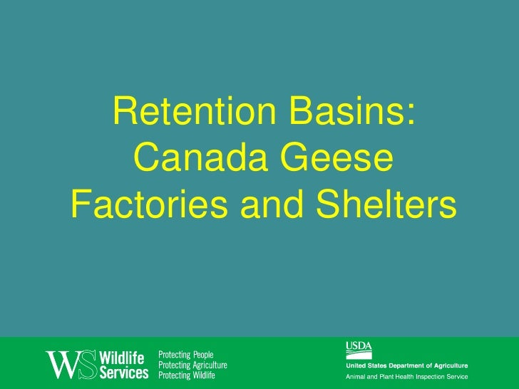 Retention Basins:   Canada GeeseFactories and Shelters