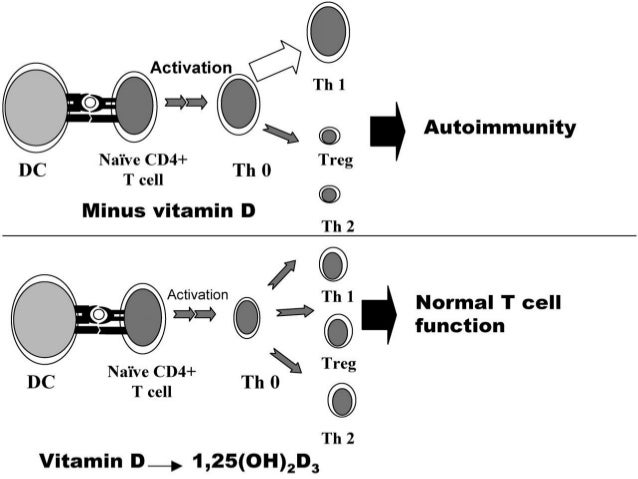55 • The degree of expression of the protein Ninjurin-1 by endothelial cells of the BBB and myeloid antigen- presenting ce...