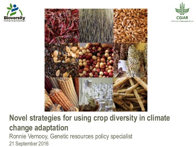 Novel strategies for using crop diversity in climate change adaptation Ronnie Vernooy, Genetic resources policy specialist...