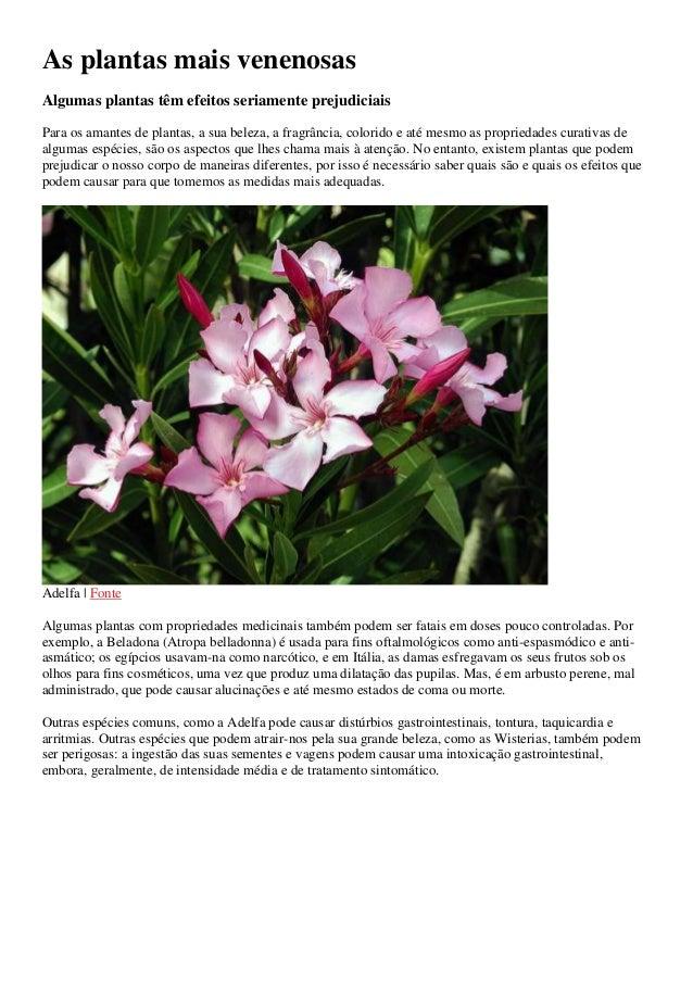 As plantas mais venenosas Algumas plantas têm efeitos seriamente prejudiciais Para os amantes de plantas, a sua beleza, a ...