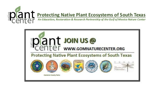 Protecting Native Plant Ecosystems of South Texas An Education, Restoration & Research Partnership of the Gulf of Mexico N...