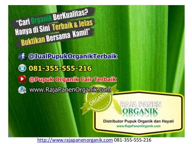 http://www.rajapanenorganik.com 081-355-555-216