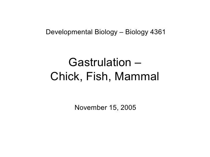 DevelopmentalBiology–Biology4361        Gastrulation–  Chick,Fish,Mammal          November15,2005