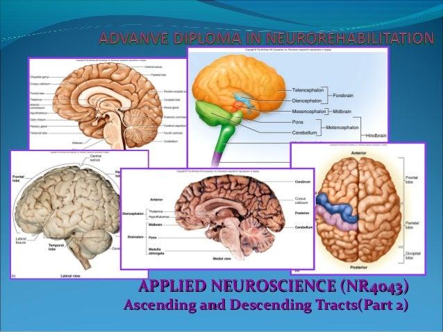 Neuroscience : Neuroanatomy of Ascending & Descending Tracts