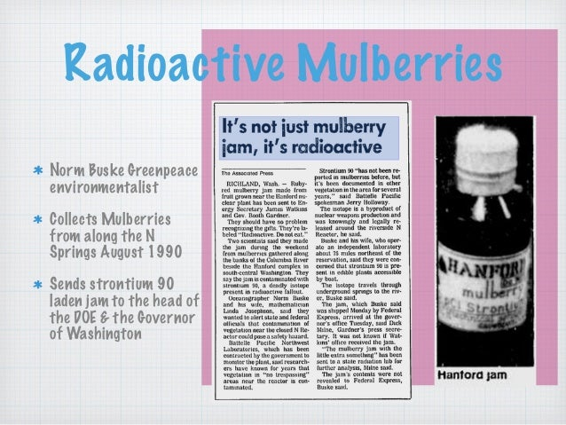 Radioactive Mulberries Norm Buske Greenpeace environmentalist Collects Mulberries from along the N Springs August 1990 Sen...