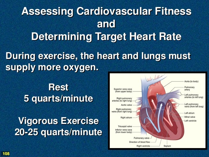 Assessing Cardiovascular Fitness                    and        Determining Target Heart Rate During exercise, the heart an...