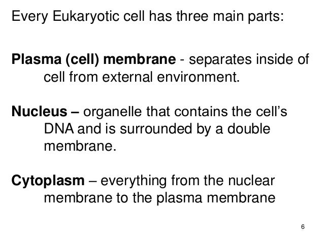 an analysis of every cell surrounded by a plasma membrane What is the difference between the plasma membrane and the here's the link to the analysis be sure to cell is surrounded by a membrane made of phospholipid.