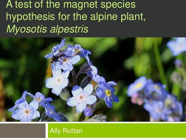 A test of the magnet species  hypothesis for the alpine plant,  Myosotis alpestris  Ally Ruttan