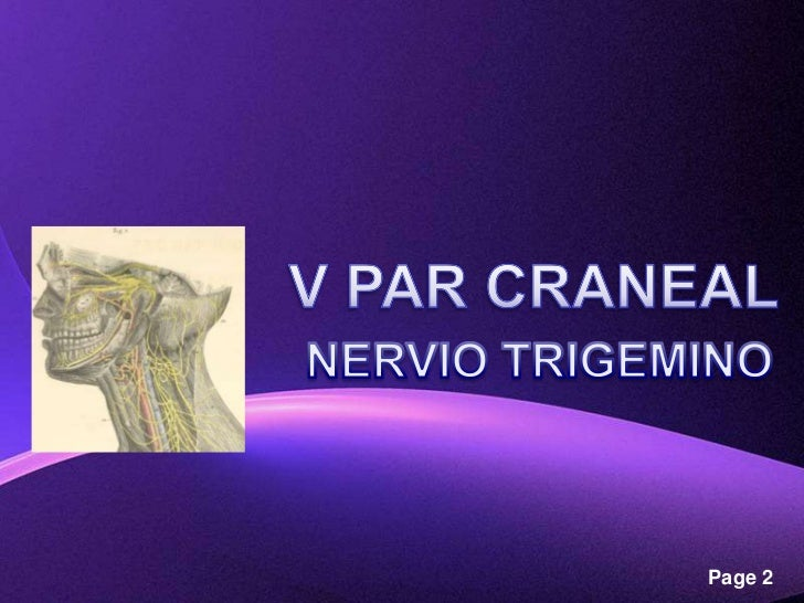 Nervio Trigémino Slide 2