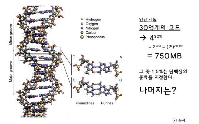 >> 목차 인간 게놈 30억개의 코드  430억 = 260억 = (28 )7억5천만 = 750MB 그 중 1.5%는 단백질의 종류를 지정한다. 나머지는?