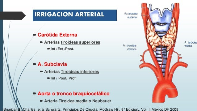 Diagnóstico y manejo del nódulo tiroideo Slide 3