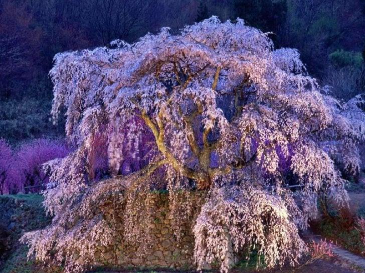 Colors of Japan