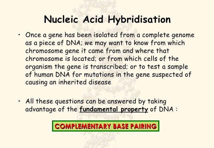 Nucleic Acid Hybridisation <ul><li>Once a gene has been isolated from a complete genome as a piece of DNA; we may want to ...
