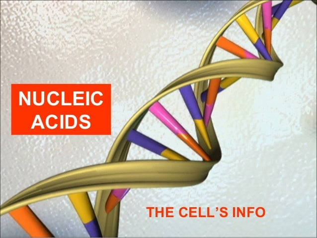 NUCLEIC ACIDS THE CELL'S INFO