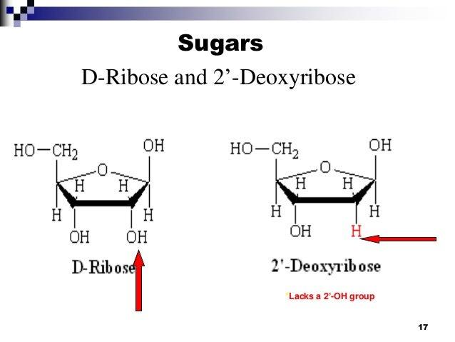D Deoxyribose Nucleic acid ch...