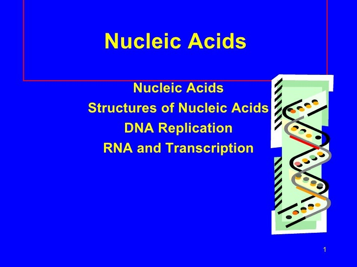 Nucleic Acids <ul><li>Nucleic Acids </li></ul><ul><li>Structures of Nucleic Acids </li></ul><ul><li>DNA Replication </li><...