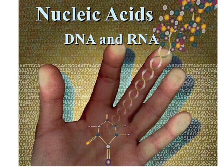 Nucleic Acids DNA and RNA