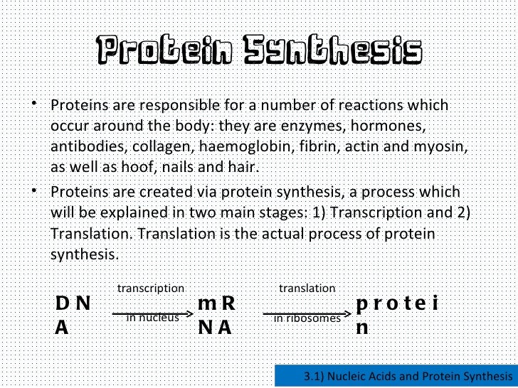 Nucleic Acids And Protein Synthesis  Protein Synthesis