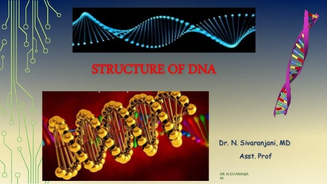 STRUCTURE OF DNA Dr. N. Sivaranjani, MD Asst. Prof DR.N.SIVARANJA NI