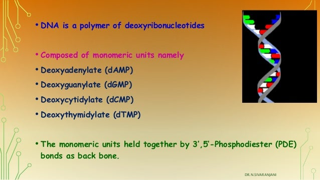 Are DNA and RNA polymers composed of monomers?