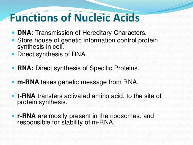 nucleic acid and protein sythesis Nucleic acid, naturally occurring chemical compound that is capable of being broken down to yield phosphoric acid, sugars, and a mixture of organic bases (purines and pyrimidines)nucleic acids are the main information-carrying molecules of the cell, and, by directing the process of protein synthesis, they determine the inherited.