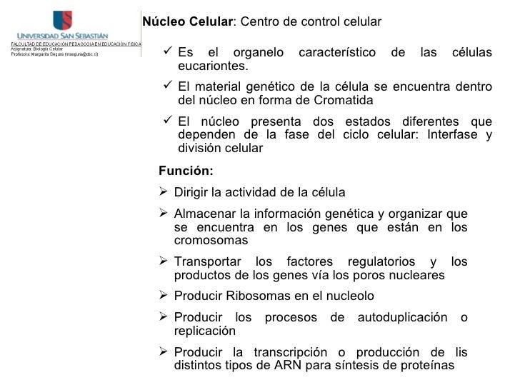 Núcleo Celular: Centro de control celular      Es el organelo         característico   de   las   células      eucarionte...