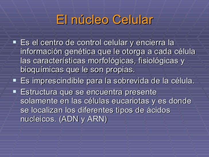 Nucleo Celular Y Material Genetico Biologia