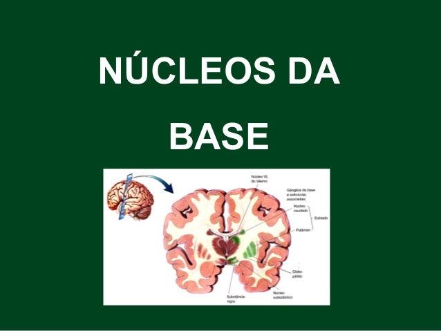 NÚCLEOS DA BASE