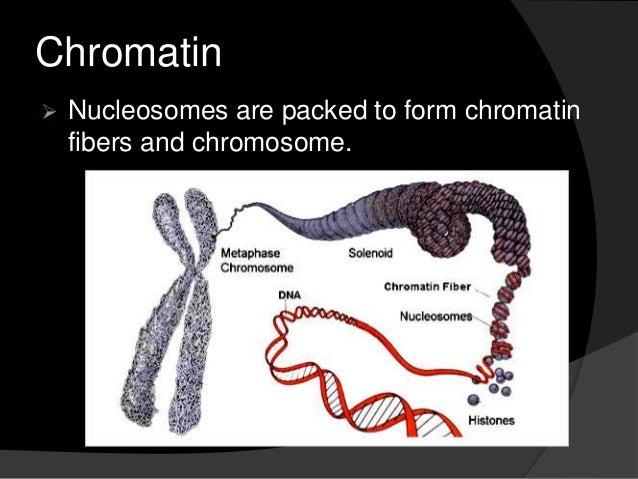 Nucleosome and chromatin