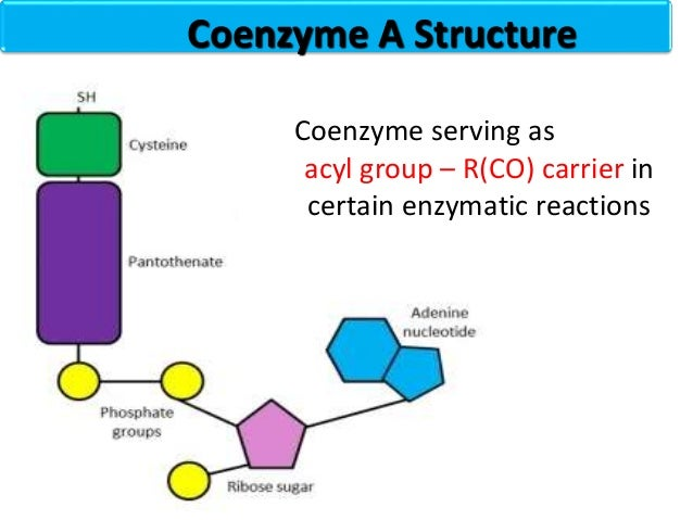 Nucleotides chemistry 34 coenzyme a structure ccuart Images