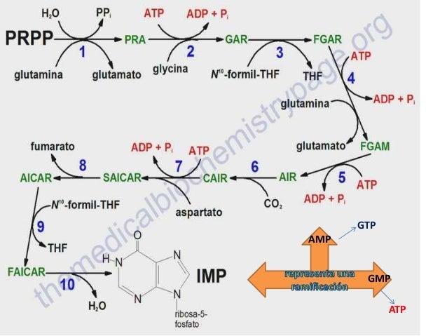 GTP AMP GMP  ATP
