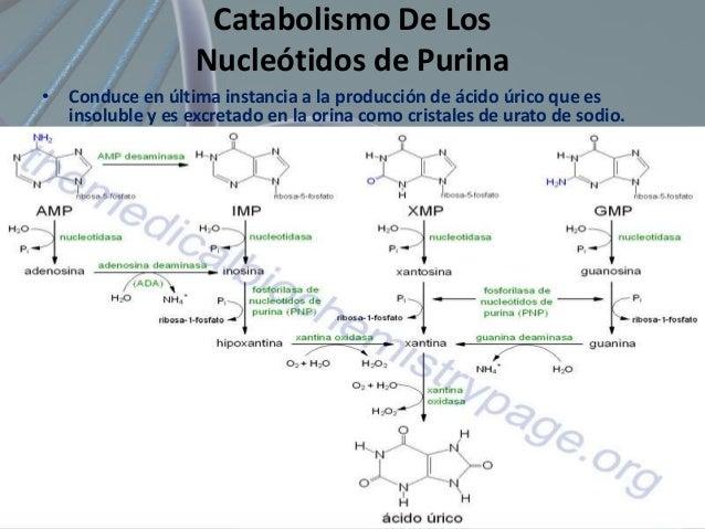 Significado Clínico del Metabolismo de Purina • Catabolismo anormal de las purinas. • Insolubilidad del producto (ácido úr...