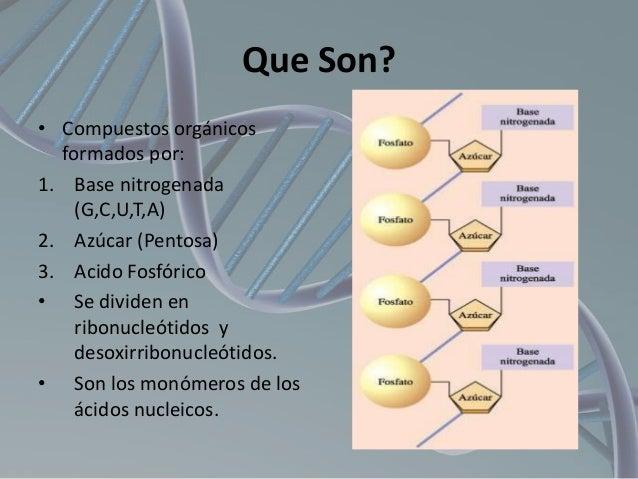 Que Son? • Compuestos orgánicos formados por: 1. Base nitrogenada (G,C,U,T,A) 2. Azúcar (Pentosa) 3. Acido Fosfórico • Se ...