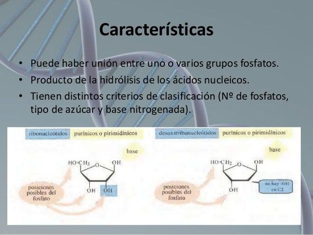 Características • Puede haber unión entre uno o varios grupos fosfatos. • Producto de la hidrólisis de los ácidos nucleico...