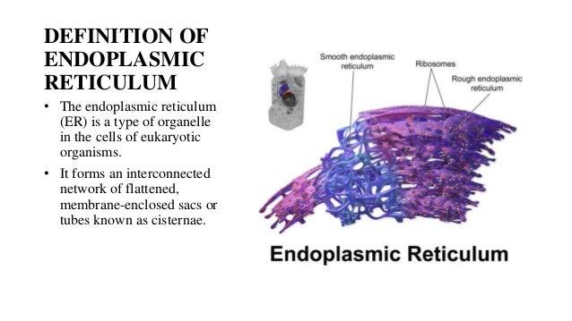 the endoplasmic reticulum