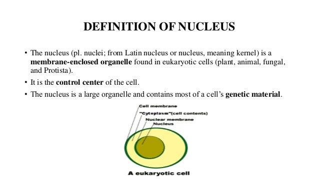 nucleus & endoplasmic reticulum, Cephalic Vein
