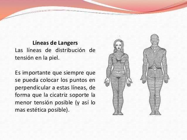 Líneas de LangersLas líneas de distribución detensión en la piel.Es importante que siempre quese pueda colocar los puntos ...