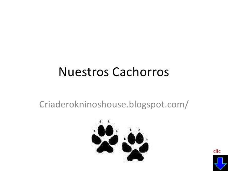 Nuestros Cachorros<br />Criaderokninoshouse.blogspot.com/<br />clic<br />