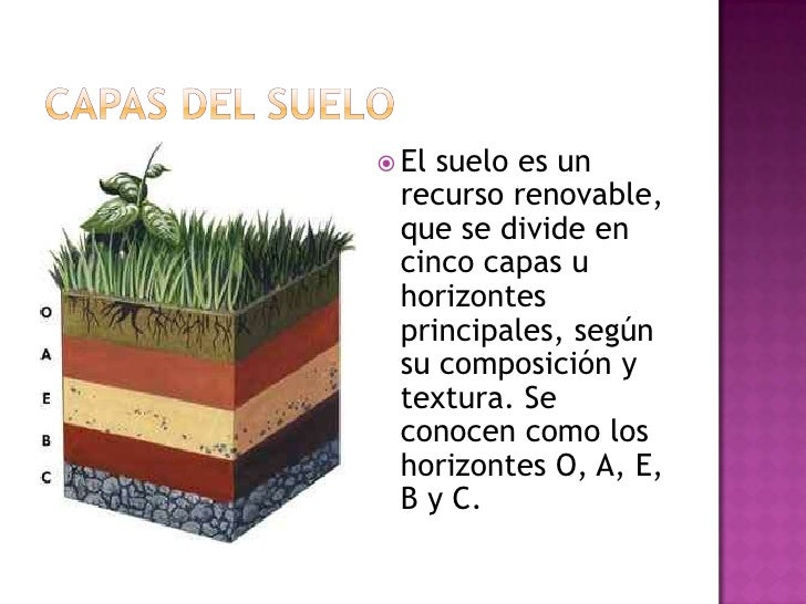 Nuestro suelo for El suelo y sus capas
