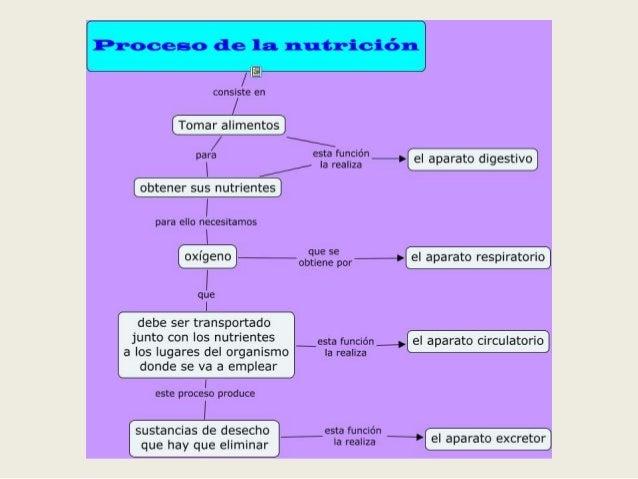 _  consiste en  Tomar alimentos  /  a  para esta función - -  / Í B reanza : › eI aparato dugestnvo obtener sus nutrientes...